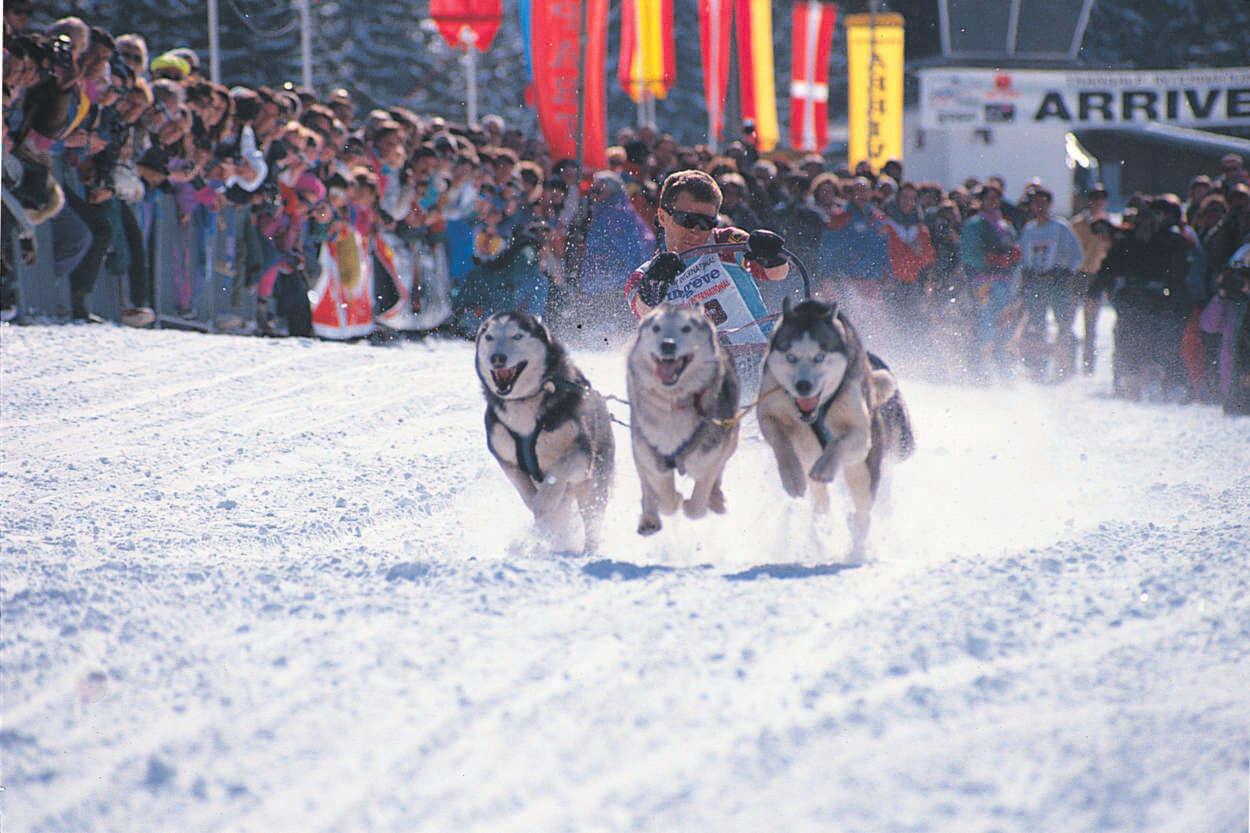 Husky racing.jpg