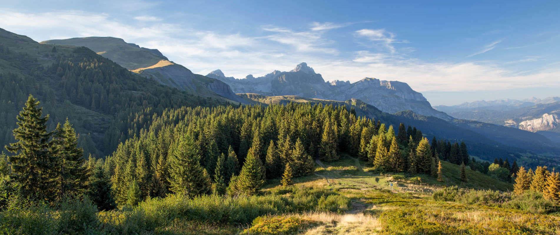 Alpine view.jpg