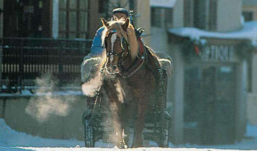 megeve-skiing-horse.jpg